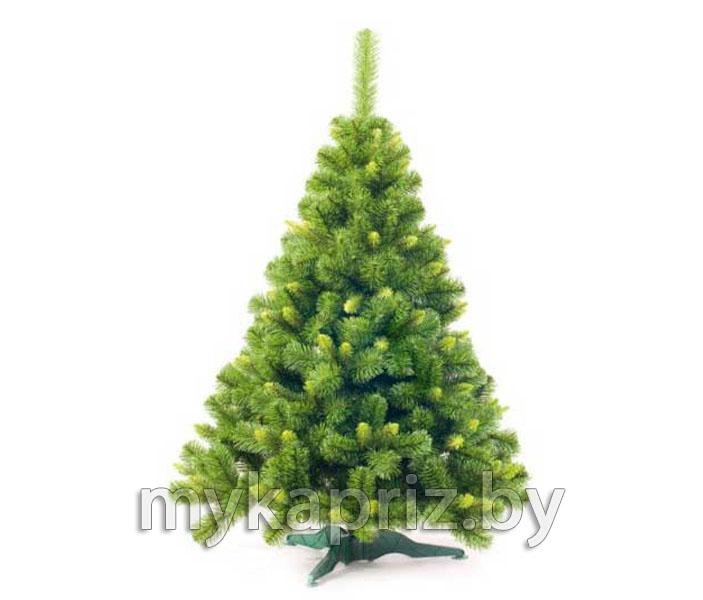 greenterra_sosna-lyuks-s-zelenymi