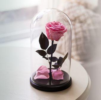 nezhno-rozovaya-roza-v-kolbe.340x340